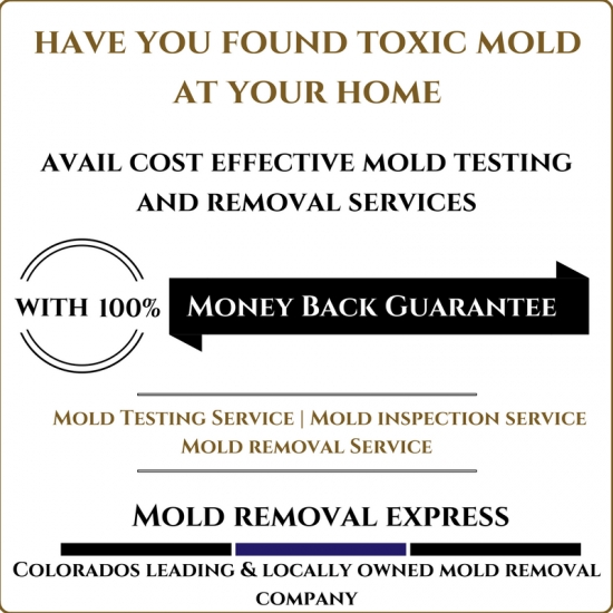 Fast, Affordable & Fully Guaranteed Mold Treatment